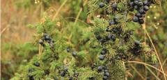 Kuva Kasvavaa liiketoimintaa luonnontuotteista -hanke